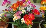 能夠凈化空氣的幾種植物花卉,吸甲醛二手煙,家中必備