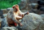 屬猴人:生肖猴不要太過於執著,面對壓力提前做好準備