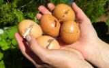 蛋殼用正確的處理方法拿來養花,花草長得旺還多開花