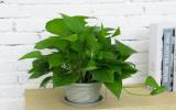 室內盆栽養花,空氣太幹燥會出問題,該怎麽解決?