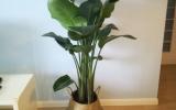 夏天滿足這4大要素室內花草盆栽才不容易黃葉